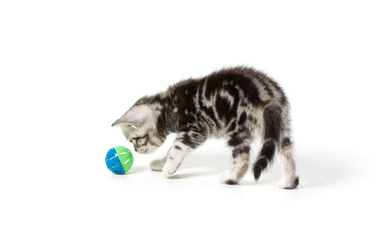 Close-up of a cat with ball