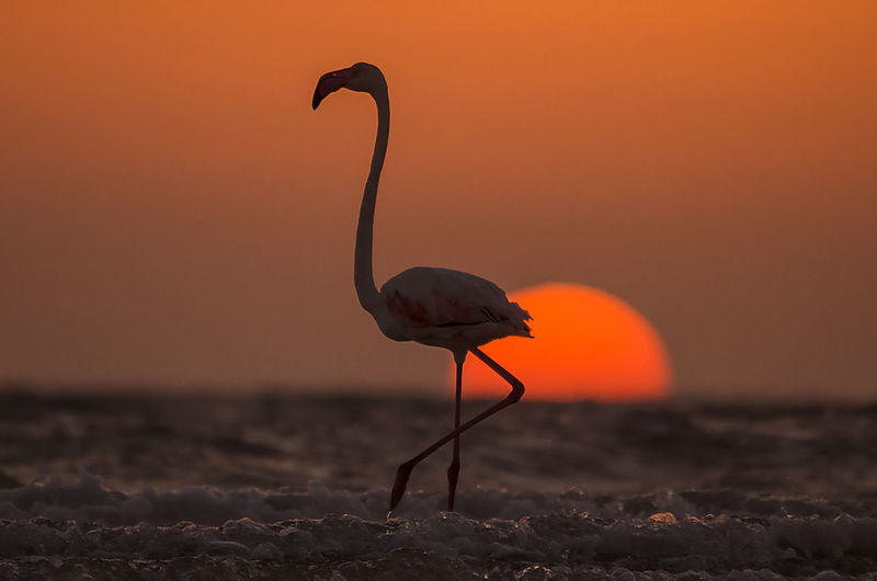 View of bird on land against sky during sunset