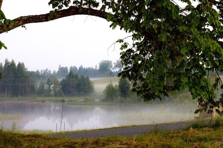 Fog Nature Summer Water_collection