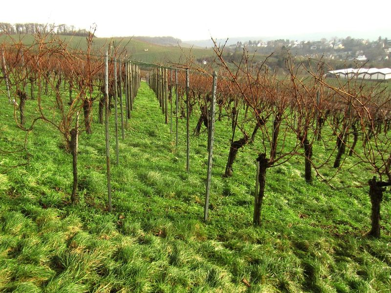 Wartberg Heilbronn Weinberg Wengert Weinbau Wine Moments