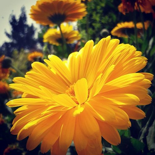 Hello World Yellow Flower Check This Out Nature Photography EyeEm Nature Lover From My Point Of View