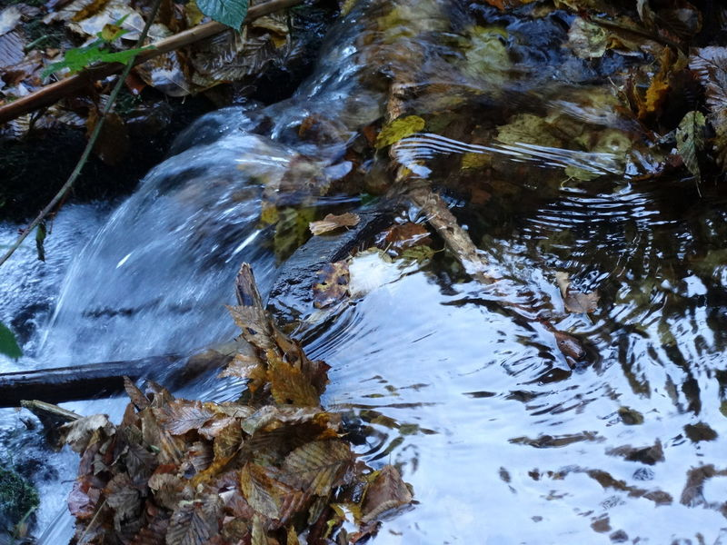 Riviere Creek Creekside BACH Bachlauf Herbst Autumn Floating Fließendes Wasser Fliessend Pure Water Water Nature Reflection No People Outdoors Beauty In Nature Motion Tranquility Close-up Forest Photography Wanderlust Pfälzerwald Nofilter Forestwalk