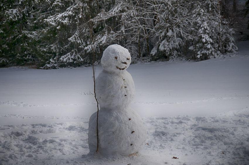 Day Nature No People Schneemann Snow Snowman Tree Winter