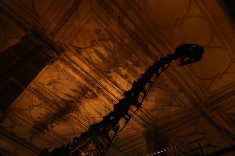 Jurassic Shadow
