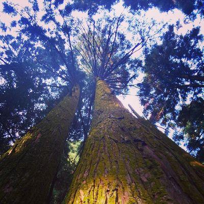 南岳衡山 Hengyang 这张是老爸指导我拍摄的,说要体现树的庞大又要把天空和茂叶拍出来,于是我就只能趴在地上贴着树根往上拍😭😭