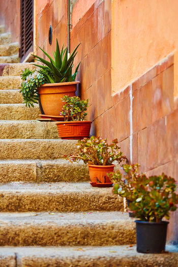Stairs with potted plants in Orbetello, Italy. Italia Italy Holidays Italy Photos Italy 🇮🇹 Plants Stairs Architecture City Italy Italygram Italy❤️ Italy🇮🇹 No People Orbetello Outdoors Plant Plants And Flowers Potted Plant Stair Staircase Stairways Street Street Photography Streetphotography ıtaly