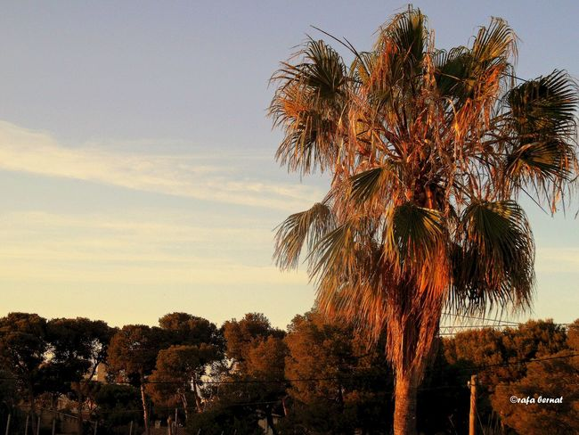 Palmera, pinada y cielo en Muchavista. EyeEm Nature Lover EyeEm Best Shots Landscape Streamzoofamily