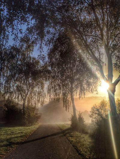 Dawn spam Goldenhour Bavaria