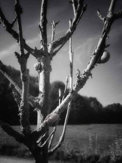 Close-up Growth Plant Branch Tree Trunk Tree Focus On Foreground Nature Stem Selective Focus Thorn Day Sky Spiked Tranquil Scene Outdoors Tranquility Botany Beauty In Nature Scenics Snails The Way Up Blackandwhite