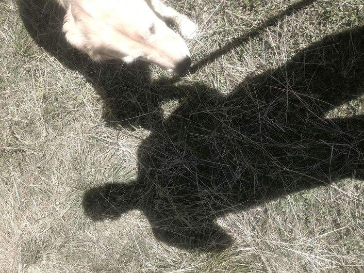 Dog Love Shadow Summer MAYA and me Trekking