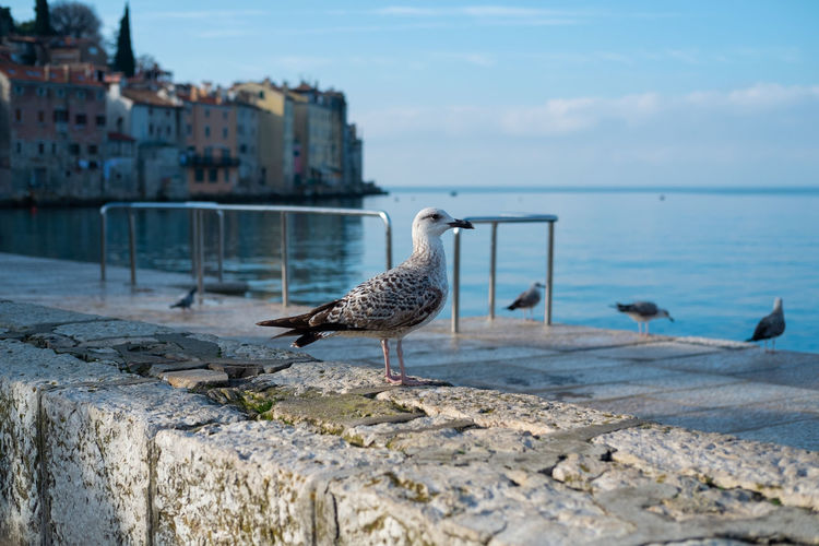 Seagul in a old seaside town Water Bird Vertebrate Animal Themes Animals In The Wild Animal Animal Wildlife Sky Architecture Sea Nature Built Structure Day One Animal Building Exterior Land Focus On Foreground Seagull Beach No People Seaside Town Seaside Exploring Sea Life Sea And Sky Old Town