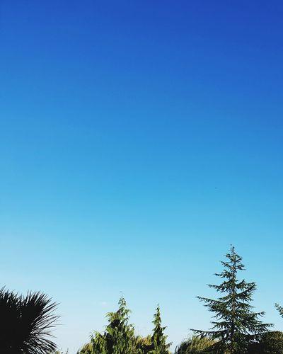 tree tops Trees Green Nature Blue Sky Summer EyeEm Selects Tree Bird Clear Sky Blue Sky Animal Themes