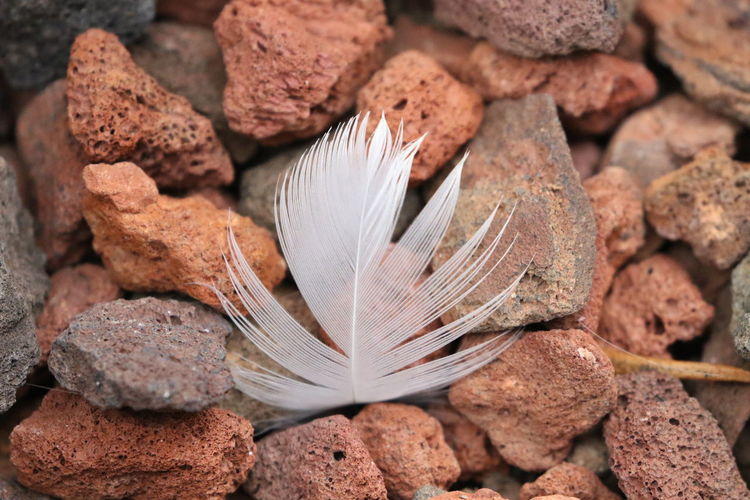 Bed Of Stones Close-up Feather  Feather On Stone Fragility Landed Nature No People Red Stones Rock Soft Versus Hard White Feather
