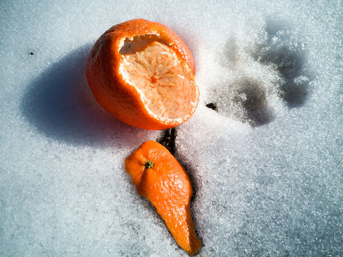High angle view of orange on white background