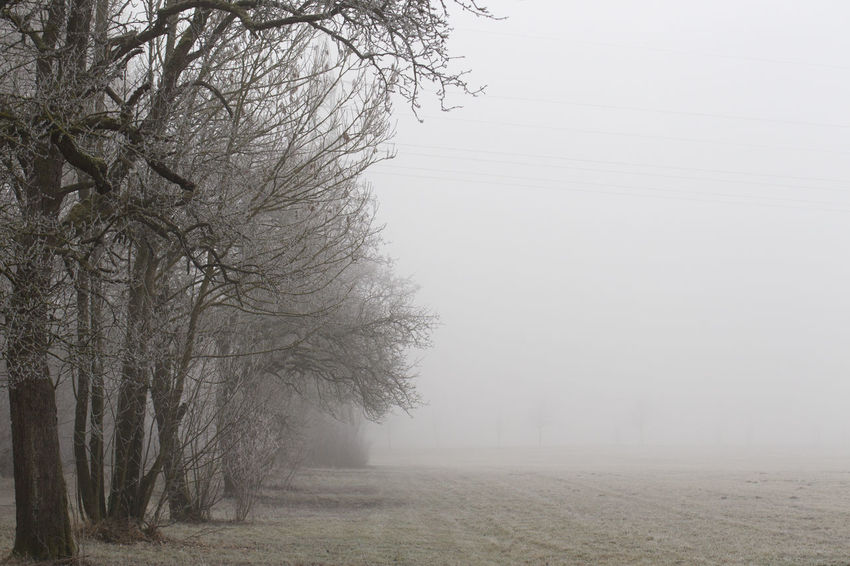 Tree Plant Fog Landscape Tranquility Bare Tree Environment Winter Tranquil Scene Beauty In Nature Scenics - Nature No People Land Cold Temperature Nature Sky Tree Trunk Non-urban Scene Trunk Outdoors Treelined Climate