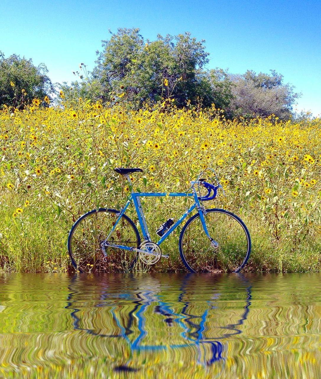 Bicycle In Water Against Yellow Flowers