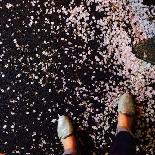 Sakura river Sakura Water Walking Around Walk Cherry Blossoms Limited Sakura2016 Laughing Thinking About Nature Missing You Finding My Color Seeyoutomorrow Joy Dontleaveme See You Nextyear Again Memories Forever Myself Mylife Myway
