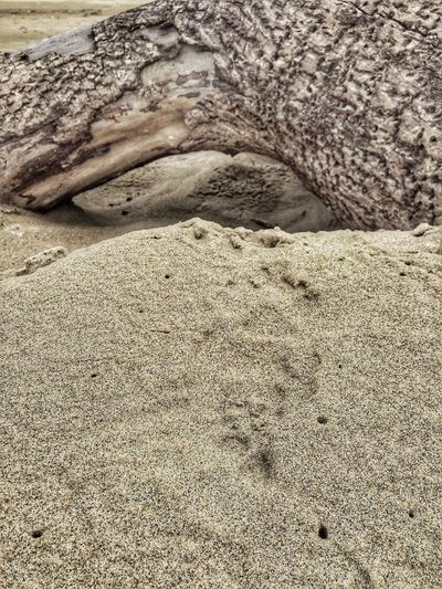 Textured  Sand Close-up Nature Beach Outdoors Paw Print Tranquil Scene Shore Driftwood Backgrounds Wood Beauty In Nature Scenics View Landscape Weathered Natural Condition Perspective Views Scenic Abstract Nature Tranquility Tree Trunk Logsonthebeach