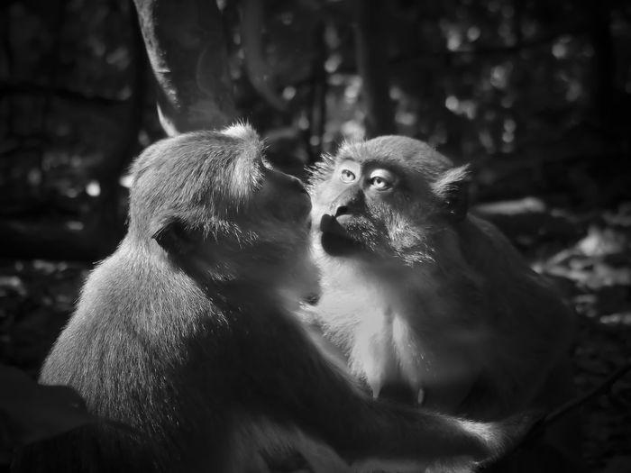 Monkeys In Forest