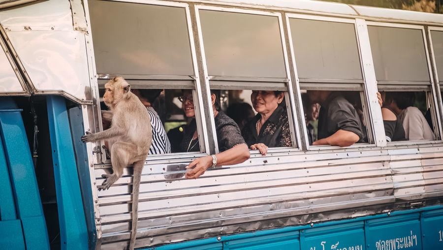 Animal Wildlife Lifestyles Mammal Monkey One Animal People Pets Primate