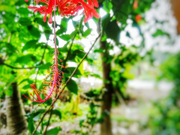 A flower thats