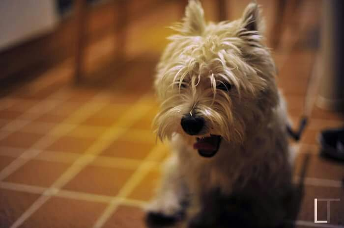 Sally Yawn Yawning Dog Sleep Dog