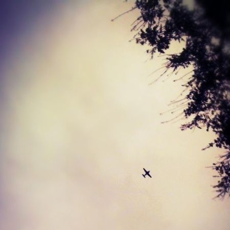 Iphonegraphy Iphone3g Plane Tree sky