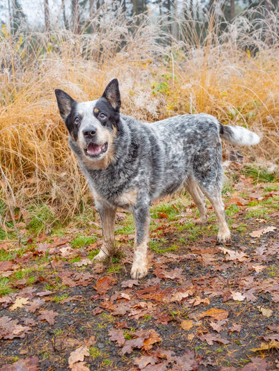 Portrait of dog standing on ground during autumn