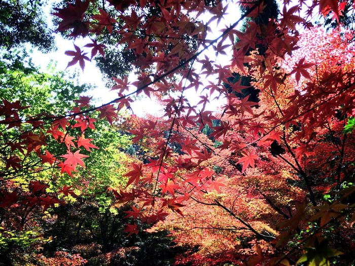 Nature Beauty In Nature Autumn Sky Kyoto 即宗院