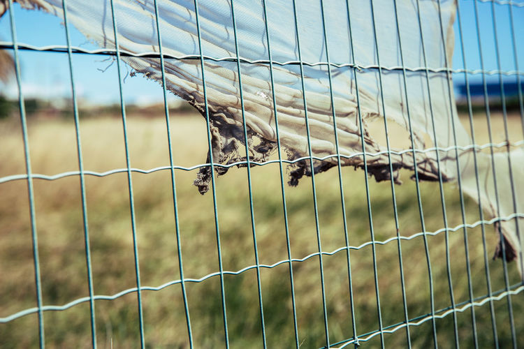 Focus On Foreground Fence No People Barrier Day Boundary Security Safety Protection Metal Animal Vertebrate Nature Animal Themes One Animal Close-up Mammal Animal Wildlife Animals In Captivity Cage Outdoors Herbivorous Animal Head