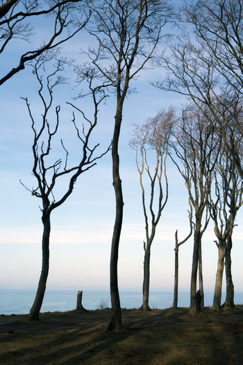 Bare trees by sea against sky