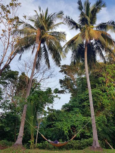 sleeping Relax Coconut Trees Cradle Mountain Tree Day Lanta Island Outdoors Coconut Palm Tree