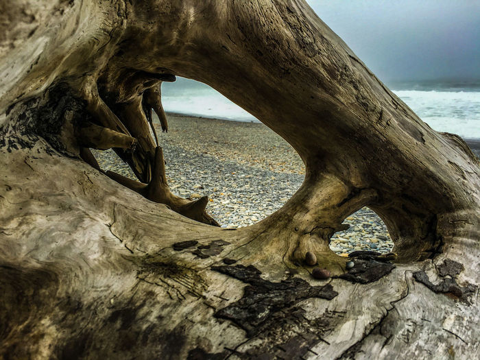 Close-up of tree trunk at beach against sky