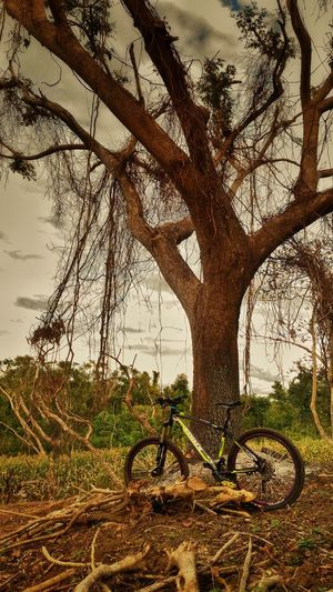 Tree Beauty In Nature Outdoors Nature Sixpack Enduromtb Trail Ride Suntour Philippines Enduro Cross Country Mountain Biking Mountainbike Nature Downhill/ Freeride AMbiking Bicycle