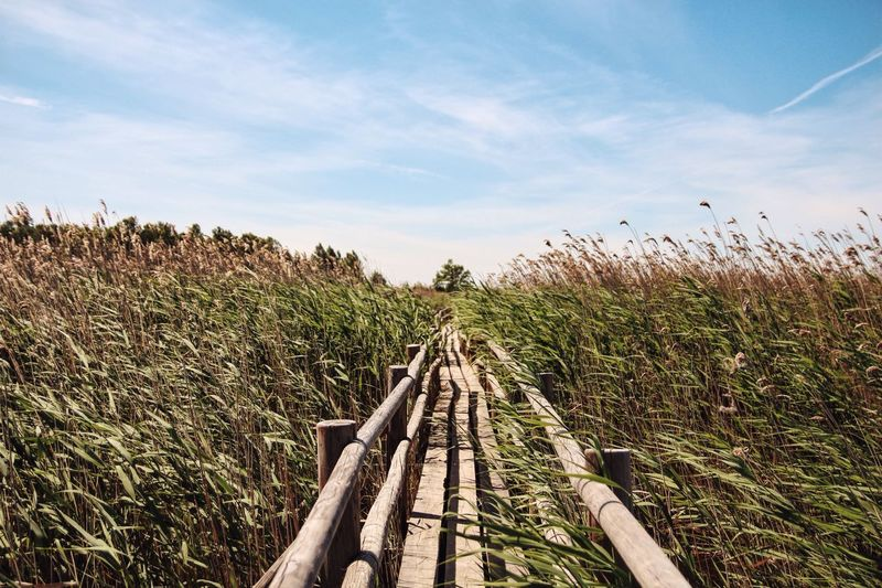 The Great Outdoors - 2016 EyeEm Awards The Essence Of Summer Summer Nature Field Path Pathway Pattern