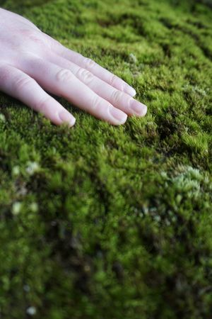Caress Elbsandsteingebirge Feeling Close To Nature Close-up Ecological Ecology Feeling Nature Germany Grass Green Color Growth Human Finger Human Hand Moss Moss Plant Nature Sachsen Saxony Sächsische Schweiz Touching