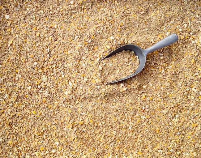 Chicken feed with many different sorts of grain Backgrounds Beauty In Nature Bird Chicken Chicken Feed Close-up Day Elevated View Farm Feeding  Food Grain Ground Maiz Mix Nature No People Outdoors Pattern Poultry Rural Shore Shovelhead Sunflower Seeds Tranquility