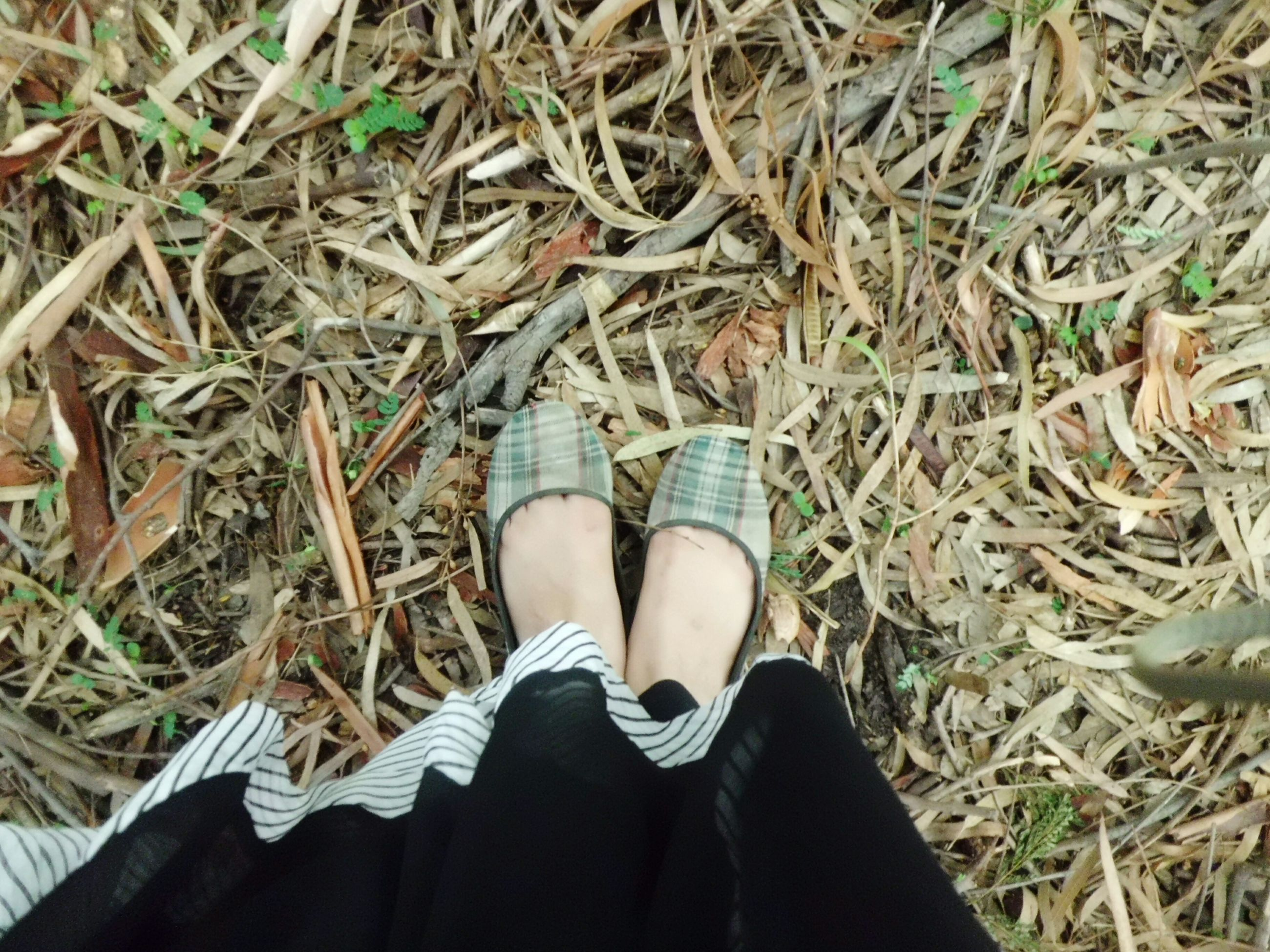 low section, person, shoe, personal perspective, footwear, human foot, grass, lifestyles, field, leisure activity, part of, outdoors, canvas shoe, day, pair, grassy, close-up, nature, leaves