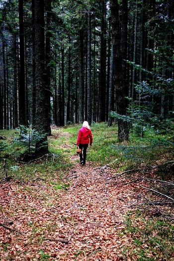 Tree Forest Real People Nature The Way Forward Walking Day One Person Outdoors Growth Non-urban Scene People Beauty In Nature Red Little Red Riding Hood Enjoy The New Normal Eyeemphoto EyeEm Zanxy98 Women Around The World