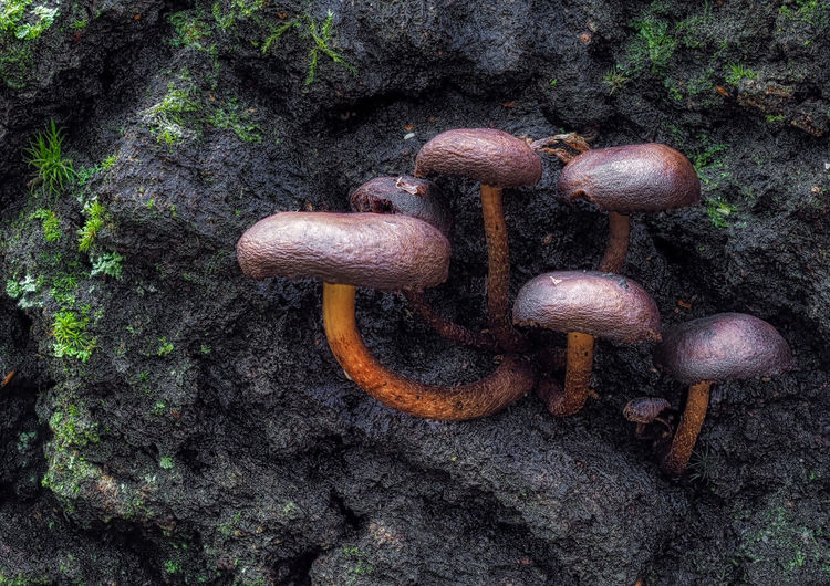 High angle view of mushrooms on field