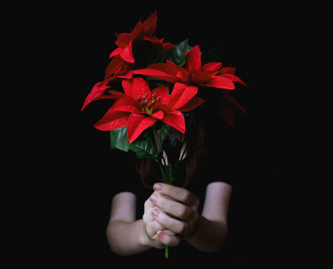 Close-up of hand holding red rose against black background