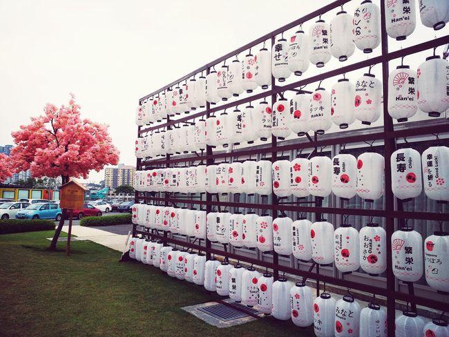 Myfavouritephoto Japanese Style Chochin Yokoso Japan Photography Japanese Culture Sunnyday☀️ Lanternfestival Lantern Photos Official EyeEm © Sakurablossoms Sakuraflowers Bbcc Naturelovers Eyeemphotography Kuala Lumpur Malaysia