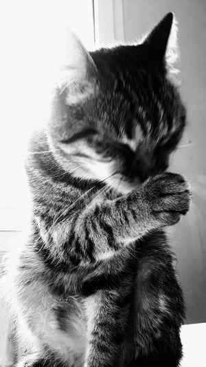 Cat Cat Lovers Cat's Toilet Cat's Attitude Cat's Life I Love My Cat