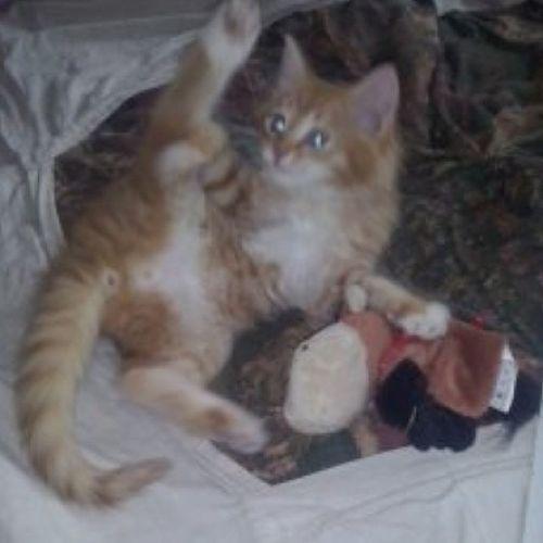 кошки Люблю_кошек ЛюбителямКошек гимнастика