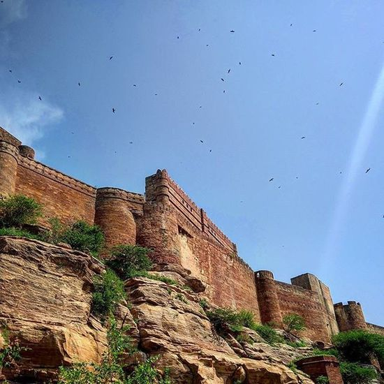 Just some ravens from Kings Landing. :-P
