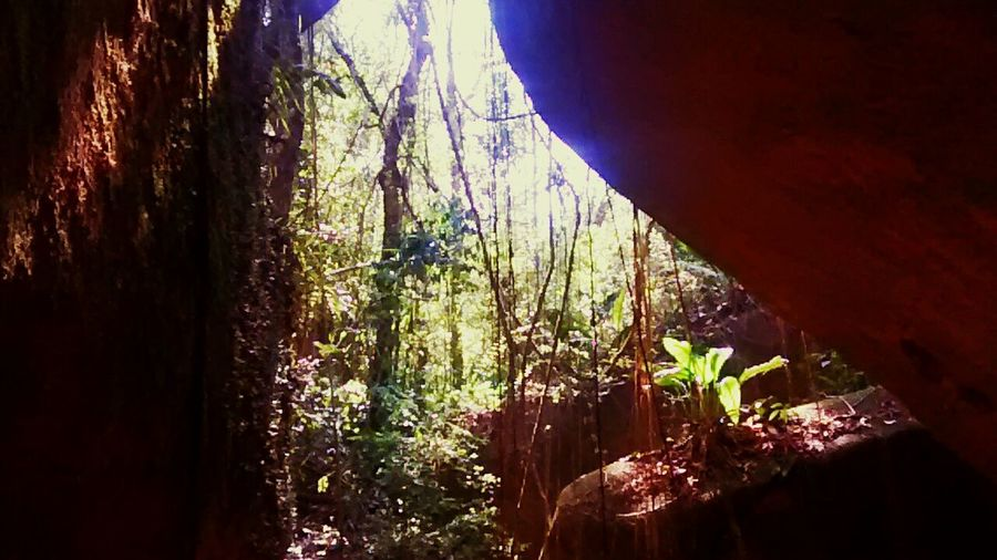 Neture Cave Mountains Escotismo SAPS
