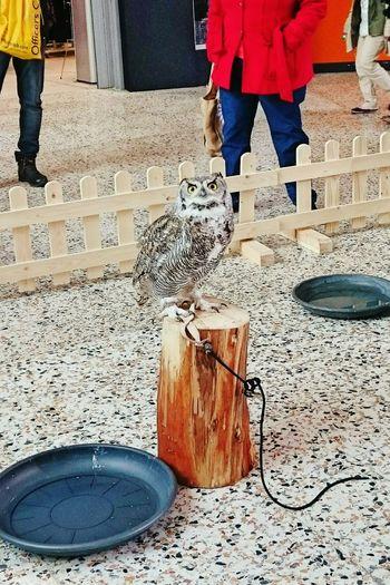 Owl Cute Owl Eyes EyeEm Gallery The Places I've Been Today EyeEm Birds