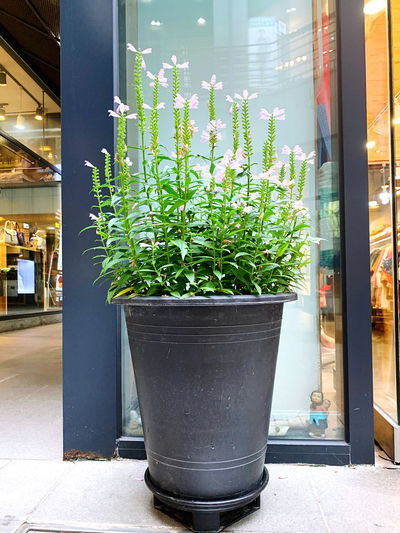 Potted plants on street seen through window