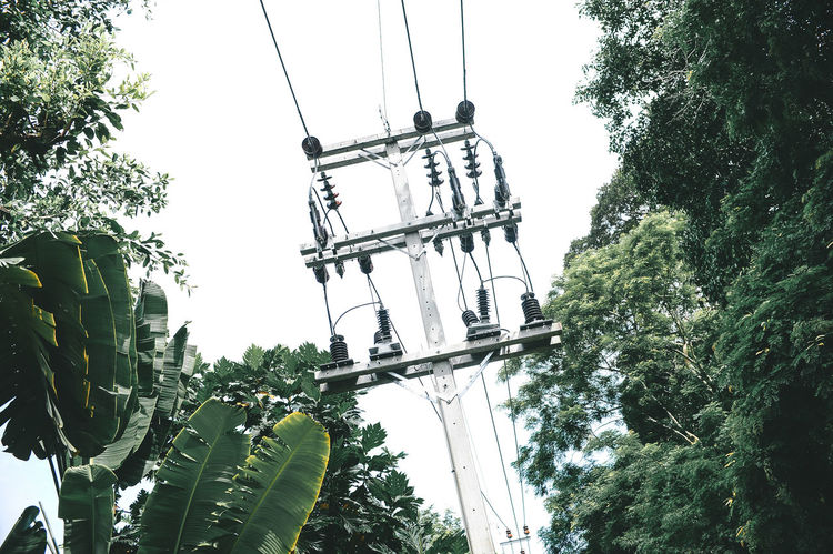 Phuket Thailand Cable Clear Sky Coconut Island Day Electricity Pylon Green Color Growth Leaf Low Angle View Nature No People Outdoors Plant Sky Tree