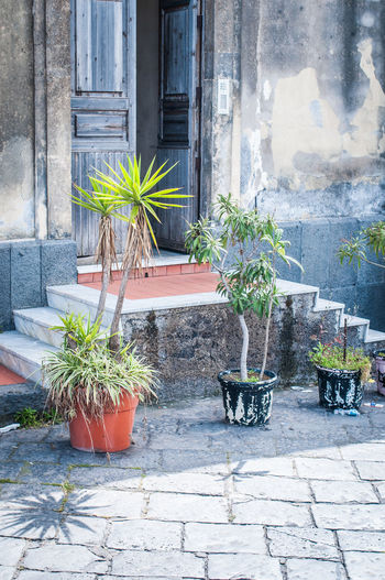 W e l c o m e to Sicily! Building Exterior Catania Day Door Entrance Entrance Gate Flower Growth Home Italy No People Open Door Outdoors Plant Potted Plant Shadows & Lights Sicily Small Trees Stairs Welcome